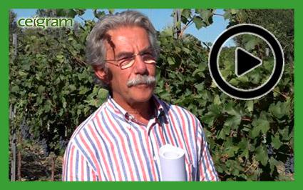 Entrevista a José Ramón Lissarrague sobre Vinysost